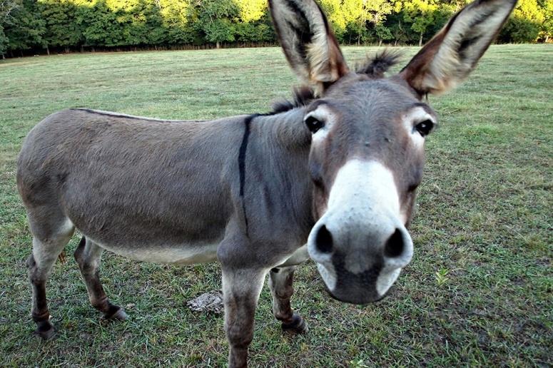 donkey1050x700.jpg?w=775